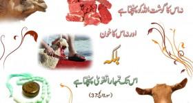 Falsafa e Qurbani from Quran in Sura e Hajj